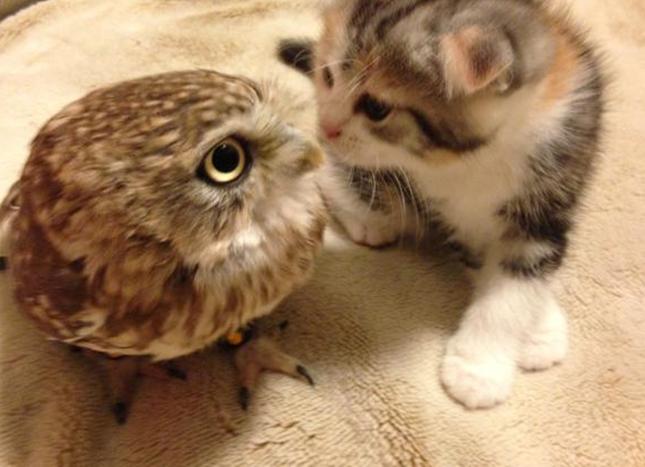 初めて出会った二人。