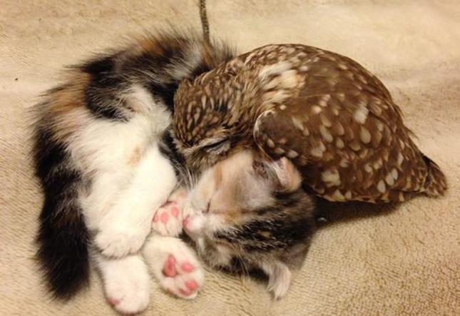 一緒に寝るように。