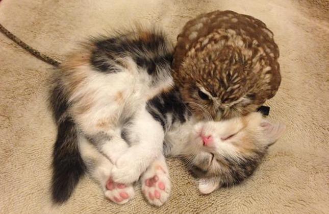 おやすみのキスをするフクちゃん。