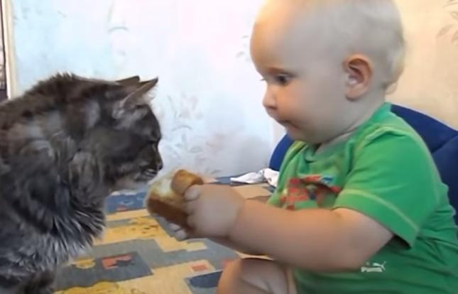 猫さんもどーぞ!