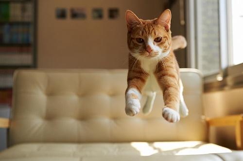 これがスタンダード飛び猫。