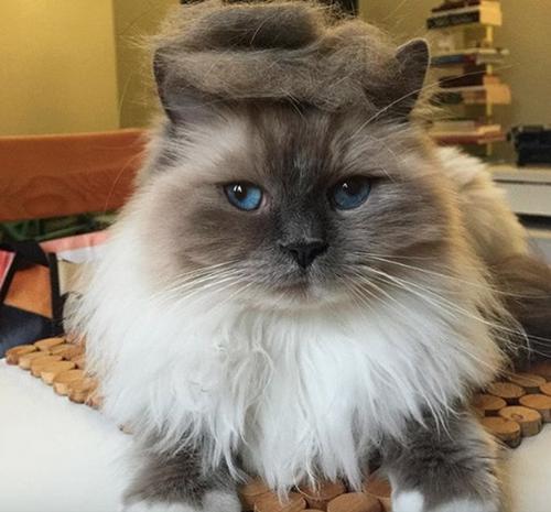 ちょこんヘアー。