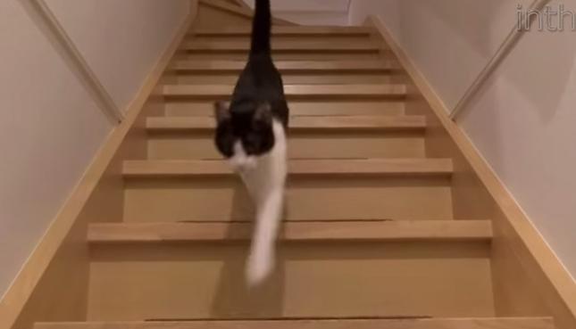 うなりながら猫がお出迎え!