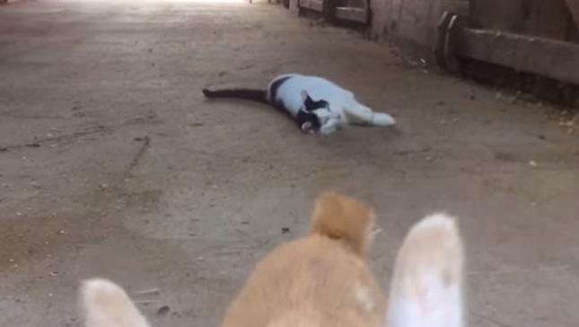 だけどやっぱり猫はマイペース。