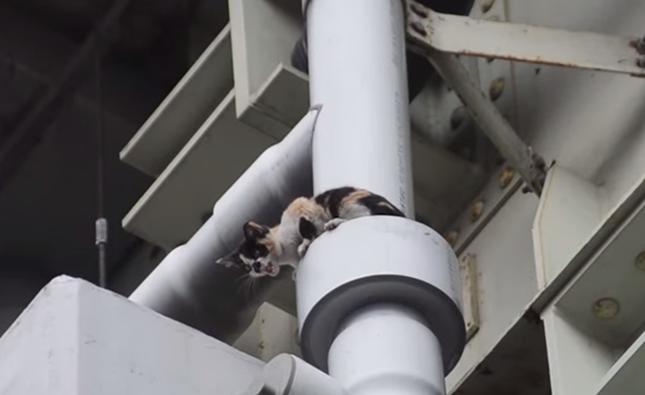 高架下に迷い込んだ子猫。