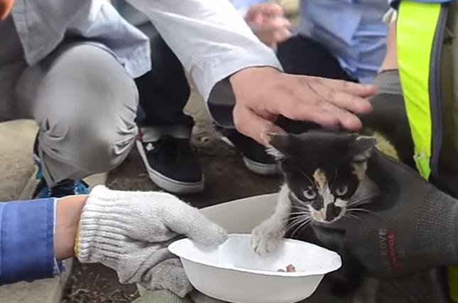 ご飯を食べる子猫。