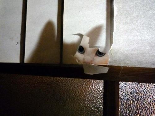 壁に耳あり障子に猫あり。