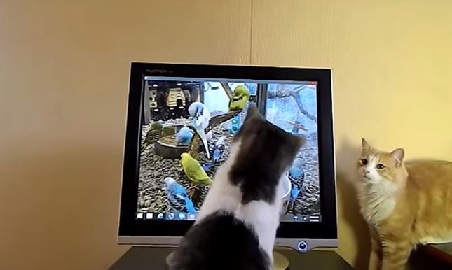 モニターに猫パンチ!