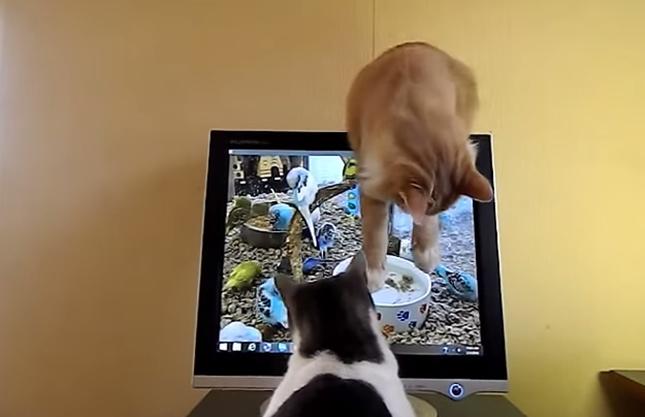 なぜか守る猫も登場!