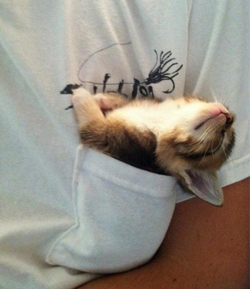 胸ぽっけ寝。