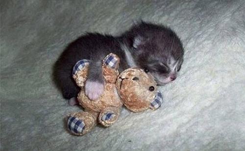抱っこ寝。