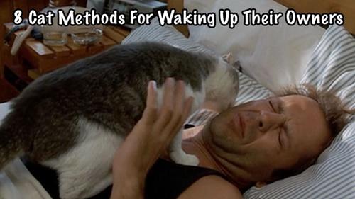 舐めまくり目覚まし。