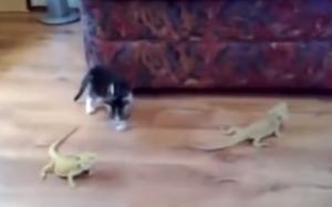 2匹のトカゲと対峙。