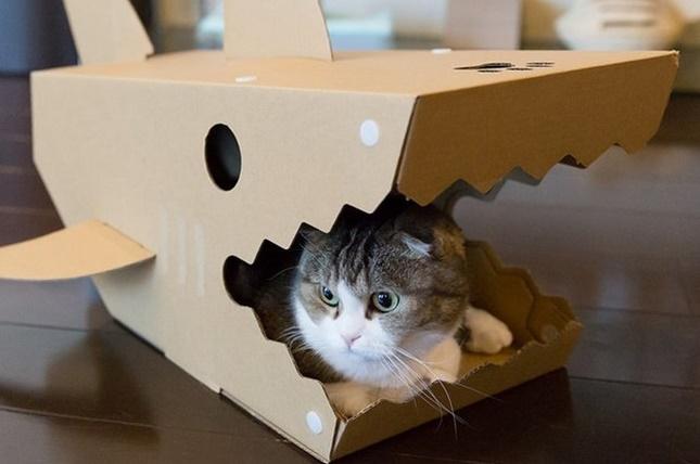 sharkhouse002cat
