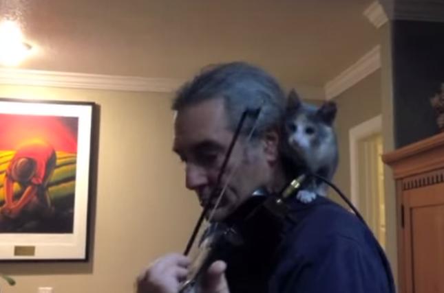 肩乗り子猫。