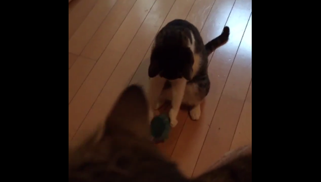 ボールを掴んで・・・