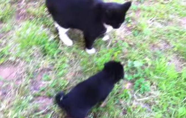 無邪気な子犬が近づくと・・