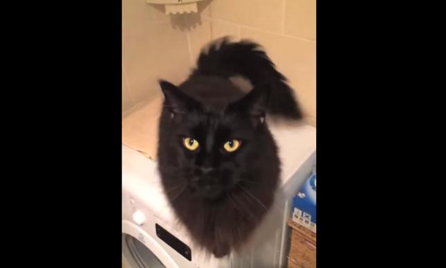 綺麗な黒猫さん。
