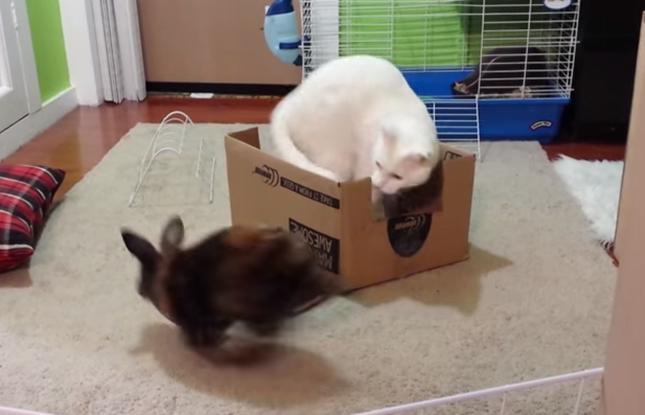 好奇心旺盛なウサギ。