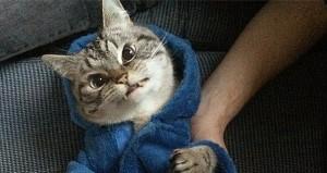 ドラキュラ猫ロキ