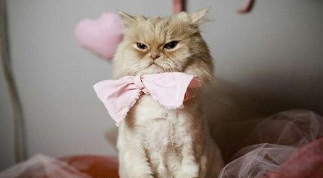 蝶ネクタイの猫。