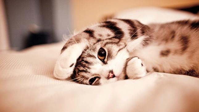 とにかくカワイイ猫。