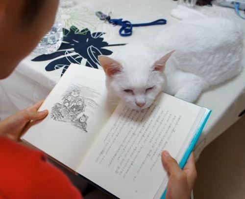 読書妨害あご乗せ。