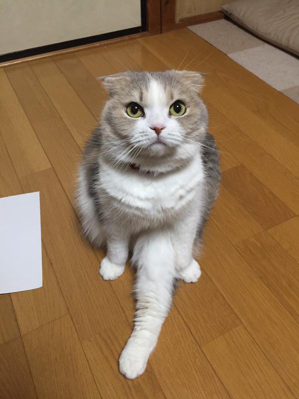 真剣な顔でなんかアピールしてくる猫。