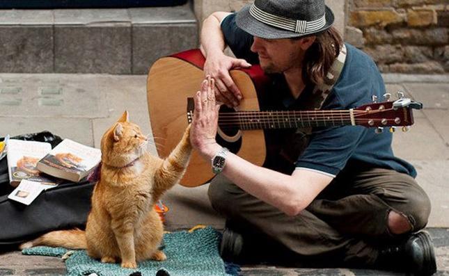 迷い猫ボブのハイタッチ!。
