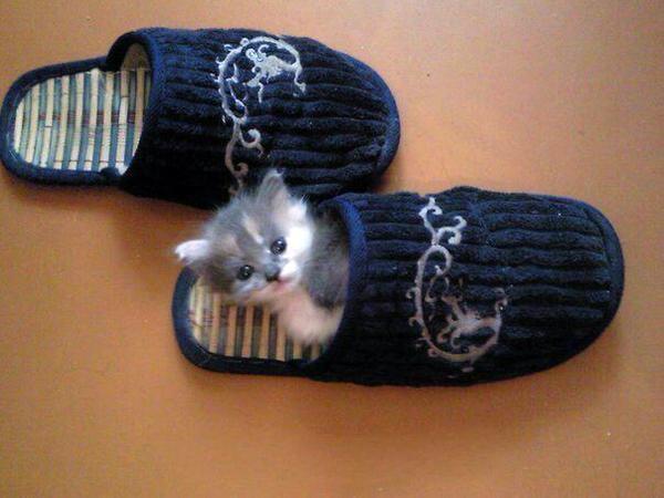 子猫は小さいからまだまだスリッパ入れる。