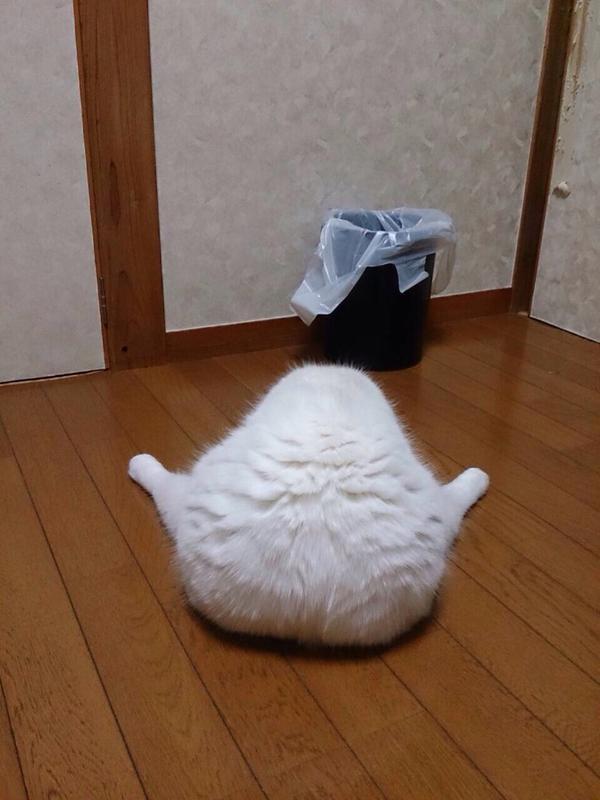 あとは海苔を巻くだけみたいな猫?