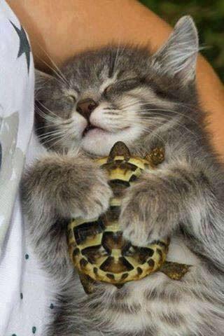 猫と亀友達♪