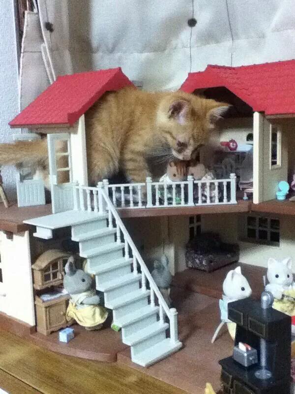 シルバニアファミリーに子猫が進撃。