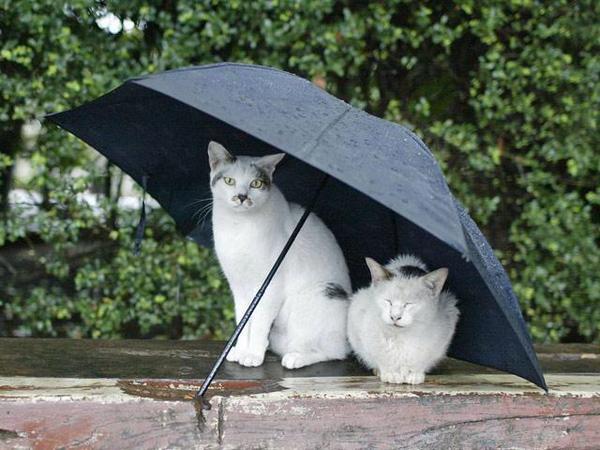 仲良く雨宿りする2匹の猫。
