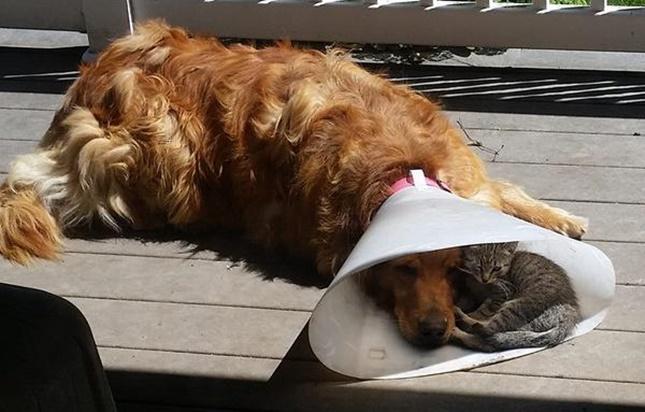 犬に甘えまくりな猫。