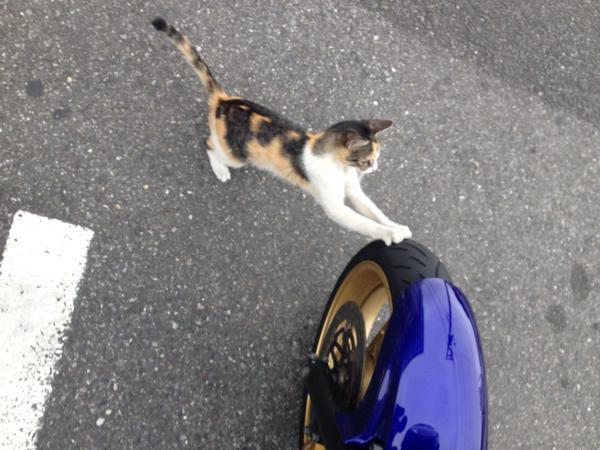 タイヤで爪とぎする猫。