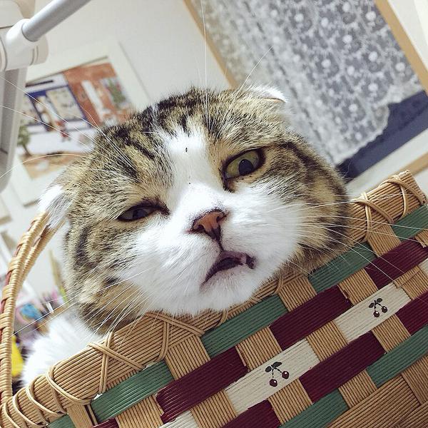 不機嫌顔の猫。