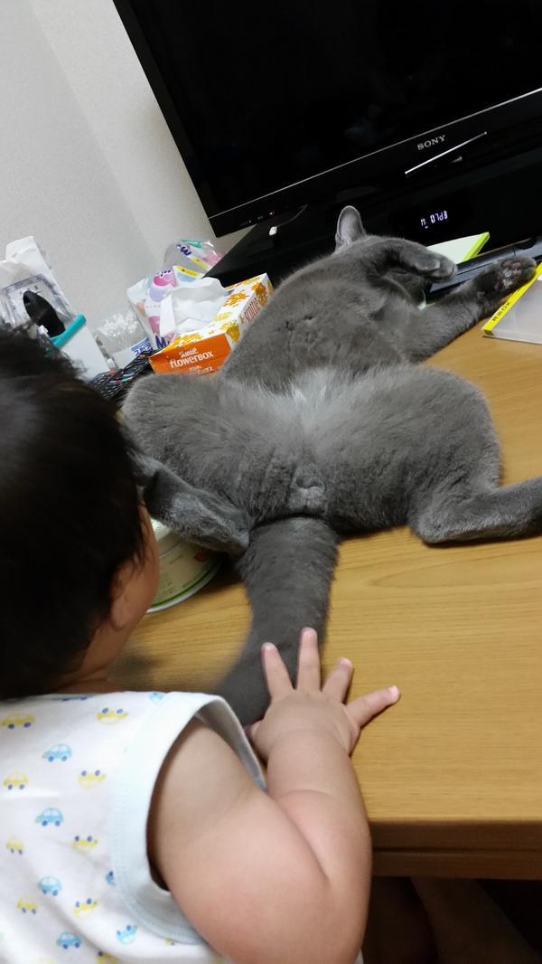 赤ちゃんに何を見せてるんだこの猫は・・・