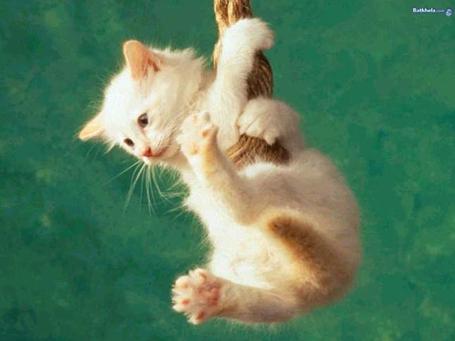 ターザンごっこをしている子猫