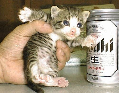 捕まえられてもフリーダムな子猫♪