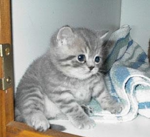 ぷくぷく子猫。