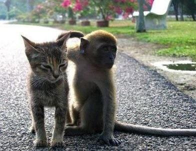 猫と猿友。