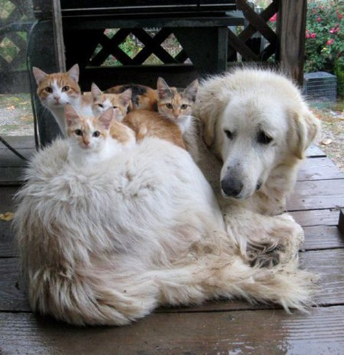 そして犬も猫達が独占。