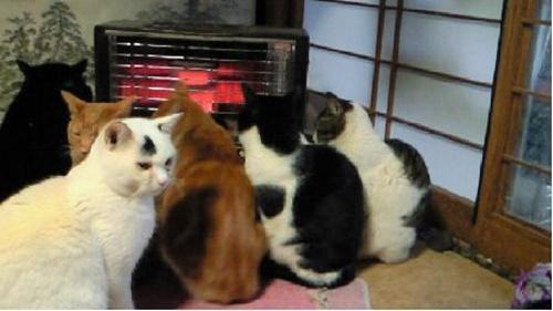 ストーブを占領する猫達。