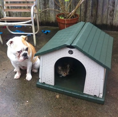 犬小屋も占領されてしまいました。