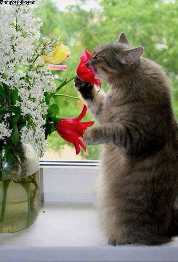 直で花を嗅ぐ猫。