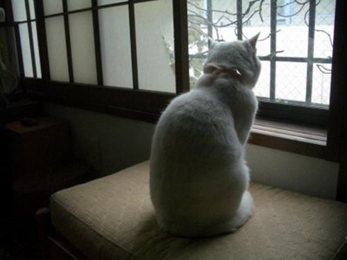 aishu013cat