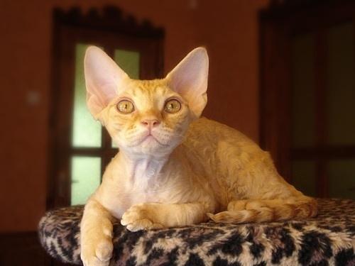 arerugi003cat