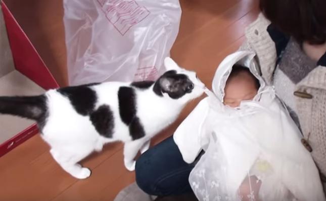 恐る恐る赤ちゃんに近づく猫。