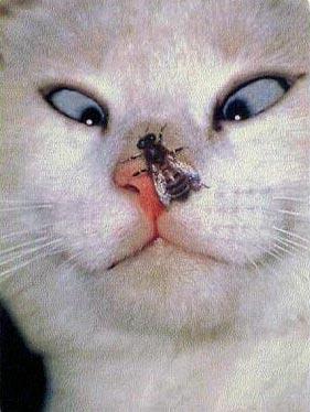 集中してより目になっちゃった猫。